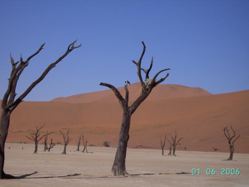 Essence de bois ? (trouvé : acacia erioloba) Namibi10