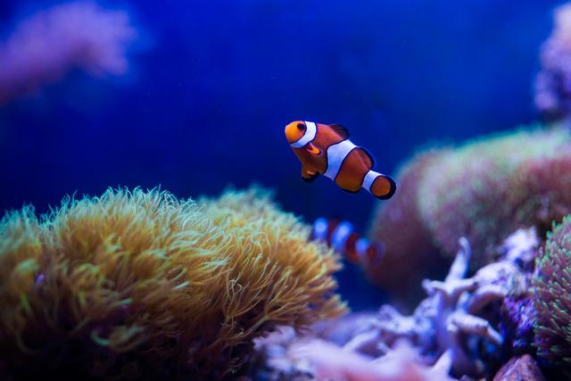 Mon premier aquarium - Page 5 21092010