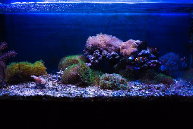 Mon premier aquarium - Page 5 21092012