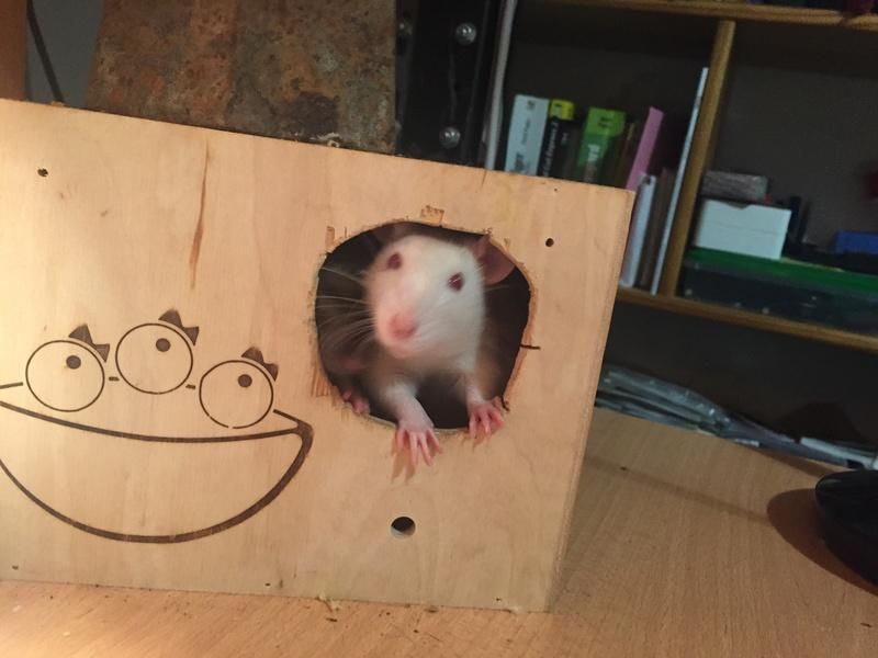 Et voici notre bébé Rat des champs : Ratatouille  - Page 2 Img_1910