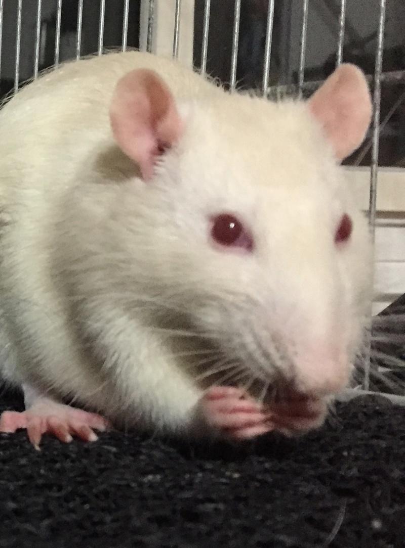 Et voici notre bébé Rat des champs : Ratatouille  - Page 2 Img_2712