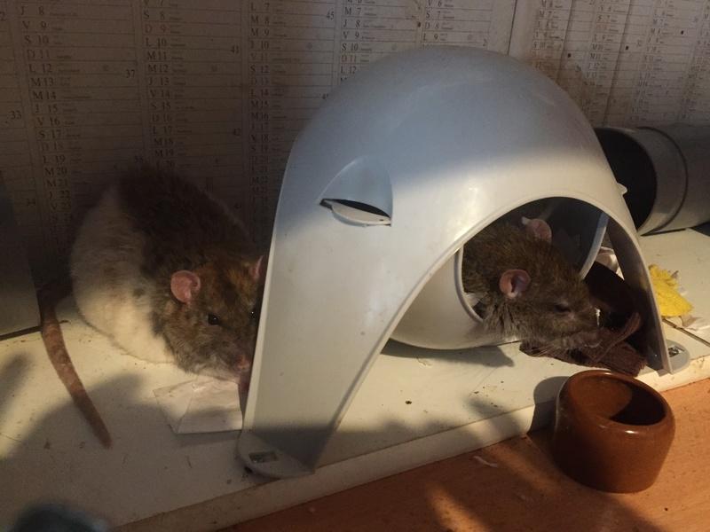 Et voici notre bébé Rat des champs : Ratatouille  - Page 2 Img_5610