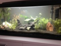 Des nouvelles de mon aquarium 80L  Img_0112