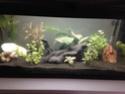 Des nouvelles de mon aquarium 80L  Img_0113