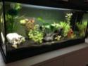 Des nouvelles de mon aquarium 80L  Img_0114
