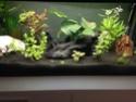 Des nouvelles de mon aquarium 80L  Img_0115