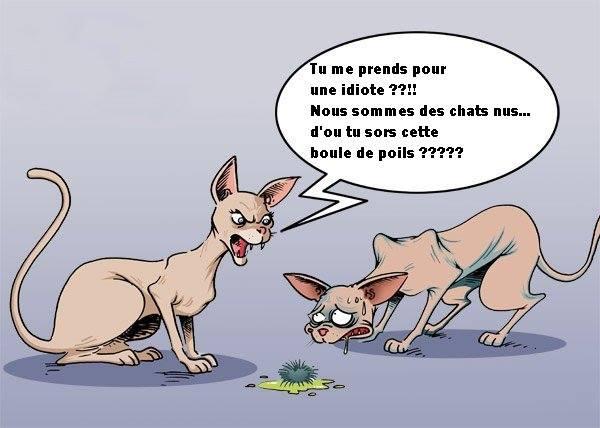 HUMOUR - Drôles de bêtes... - Page 6 12346810