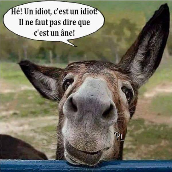 HUMOUR - Drôles de bêtes... - Page 6 13322010