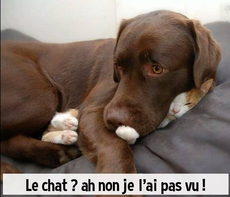 HUMOUR - Drôles de bêtes... - Page 5 13450810