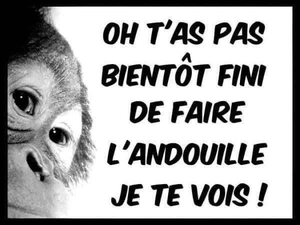HUMOUR - Drôles de bêtes... - Page 6 13516511