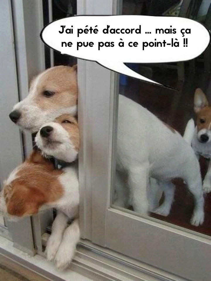 HUMOUR - Drôles de bêtes... - Page 6 14102711