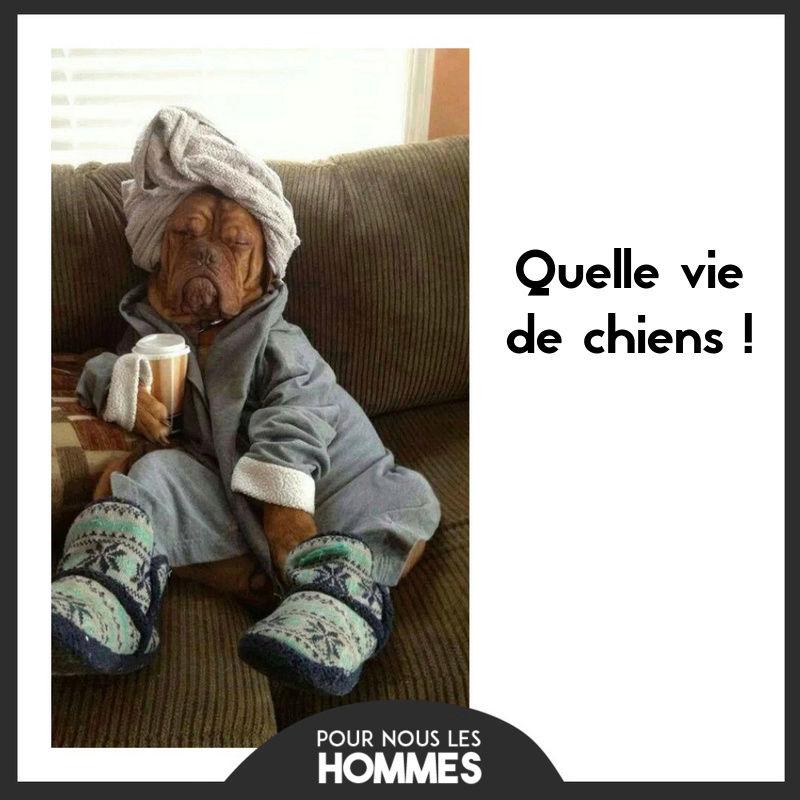 HUMOUR - Drôles de bêtes... - Page 6 14141810