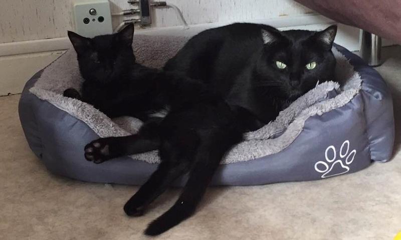 milord - Milord, chaton noir né le 01/05/2016 Img_1111
