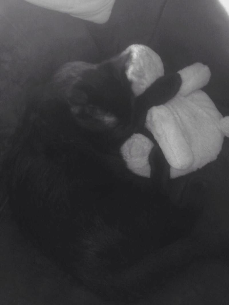 milord - Milord, chaton noir né le 01/05/2016 Img_1410