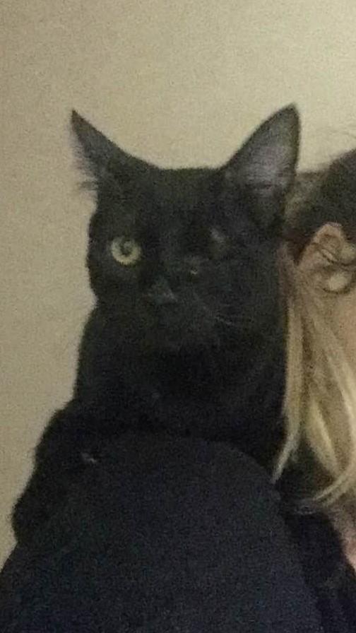 milord - Milord, chaton noir né le 01/05/2016 Img_1511