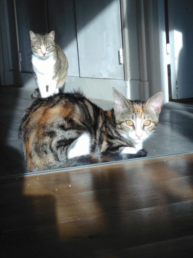 maeva - Maeva, chatonne tricolore, née le 20/05/2016 Img_2019