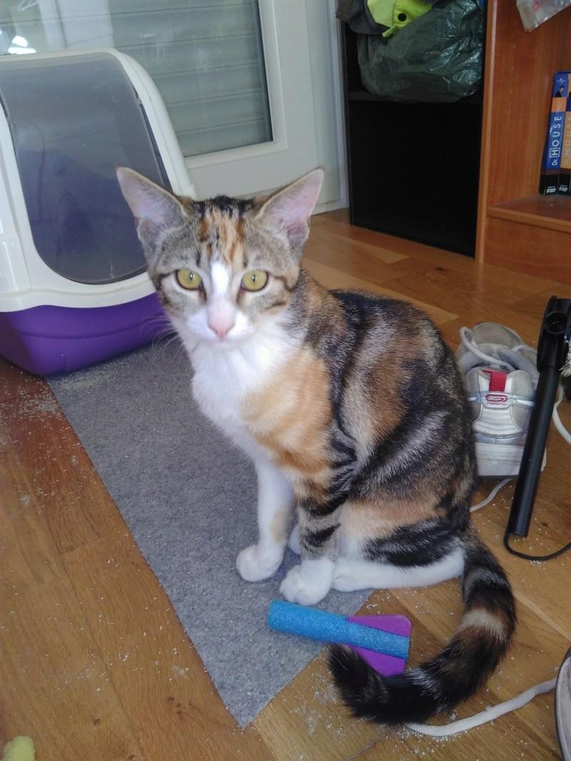 maeva - Maeva, chatonne tricolore, née le 20/05/2016 Img_2021