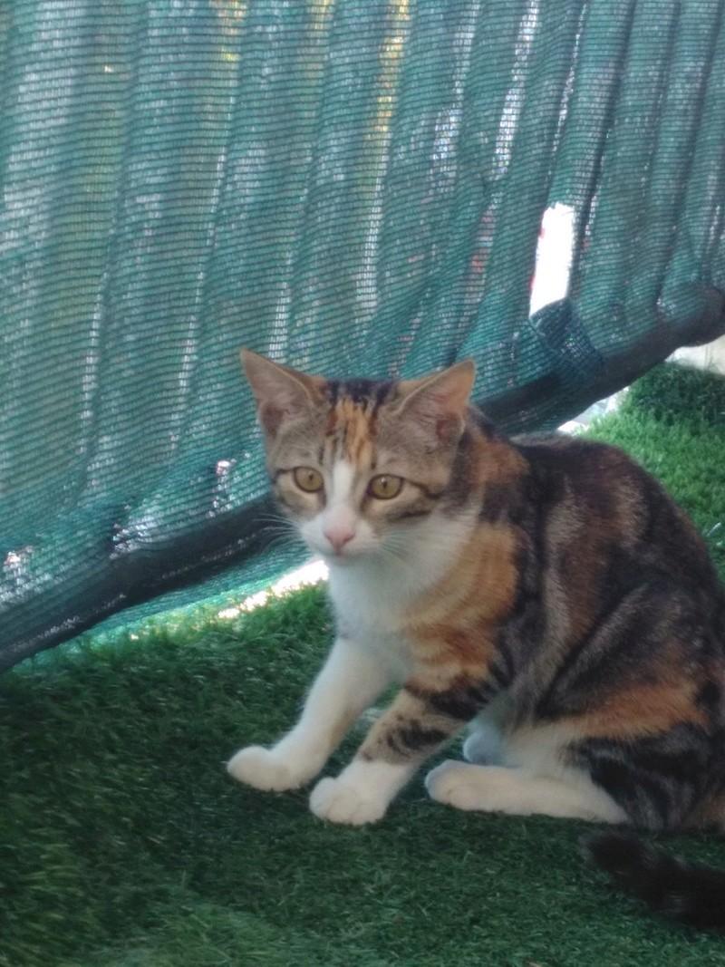 maeva - Maeva, chatonne tricolore, née le 20/05/2016 Img_2024