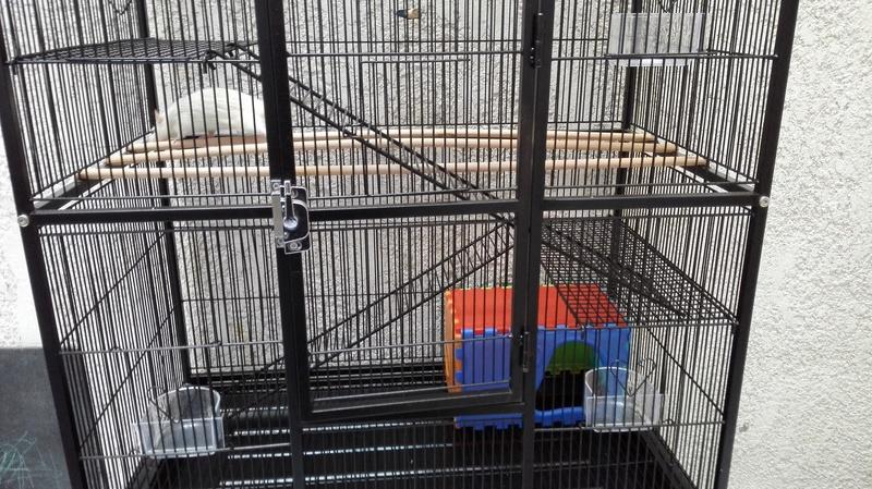 Cage Bubu XL + accessoires à Bordeaux [33] Img_2016