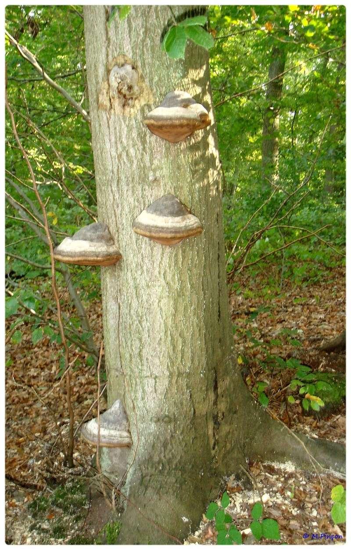 [fil ouvert] les champignons - Page 2 Dsc01110