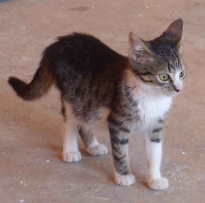 VENUS (ex TITI) - chaton femelle, née avril 2016 - En FA chez Abysse (92) - ADOPTEE PAR ANNE et FATLUM (depart94) Clocha11