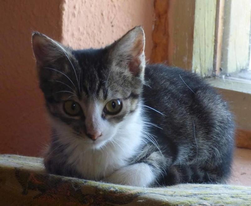 VENUS (ex TITI) - chaton femelle, née avril 2016 - En FA chez Abysse (92) - ADOPTEE PAR ANNE et FATLUM (depart94) Clocha12