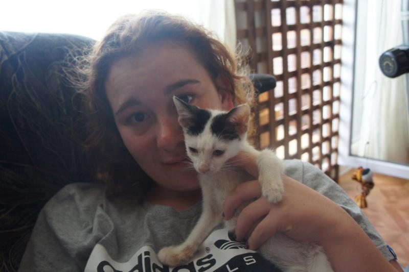 FRIMOUSSE mâle né en mai 2016  chez Florin - adopté par Claire (dpt92) - Décédé Dsc03812
