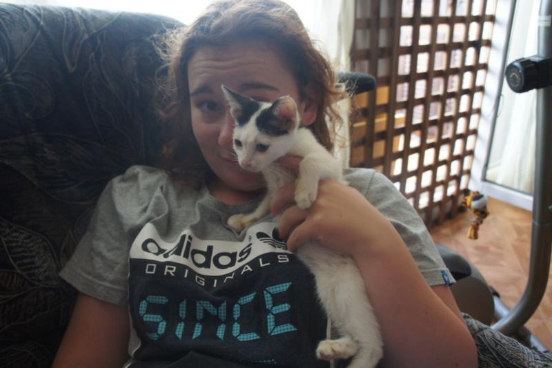 FRIMOUSSE mâle né en mai 2016  chez Florin - adopté par Claire (dpt92) - Décédé Dsc03816