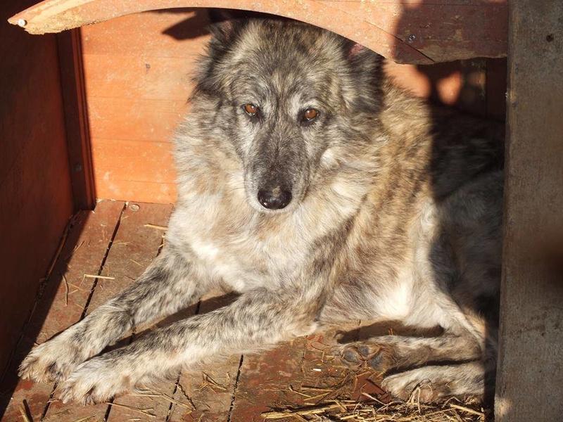 IRIS, femelle croisée, taille moyenne (Alina) - en FALD chez Vero (dpt67) - décédée Iris1110