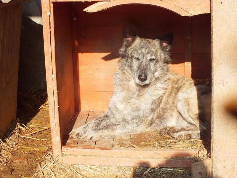 IRIS, femelle croisée, taille moyenne (Alina) - en FALD chez Vero (dpt67) - décédée Iris1210
