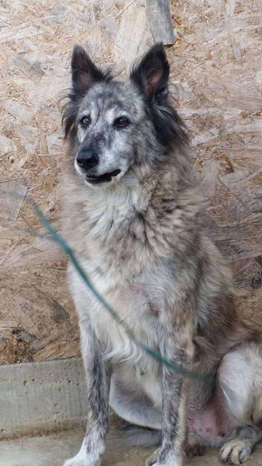 IRIS, femelle croisée, taille moyenne (Alina) - en FALD chez Vero (dpt67) - décédée Iris1410