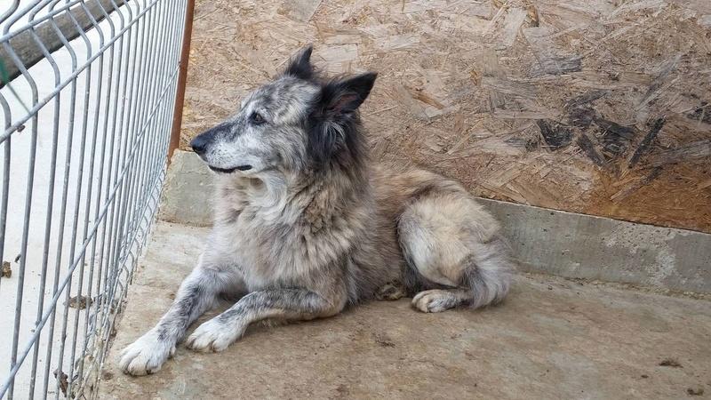IRIS, femelle croisée, taille moyenne (Alina) - en FALD chez Vero (dpt67) - décédée Iris1510