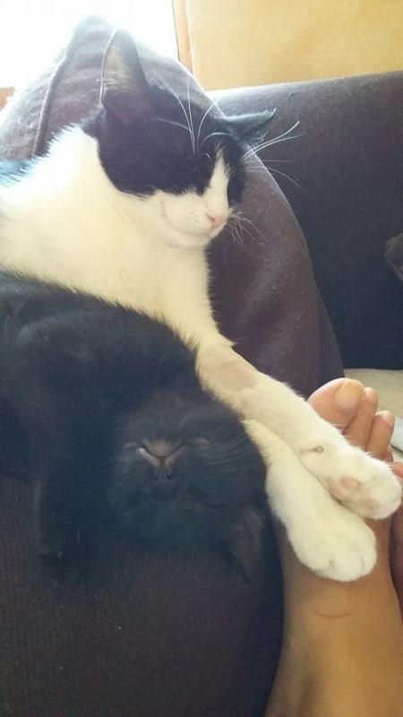LILOU -  chat femelle, née en août 2015, chez Alina - en FA chez Sabine (dpt77) - décédée Lilou11
