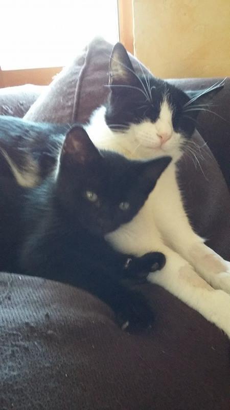 LILOU -  chat femelle, née en août 2015, chez Alina - en FA chez Sabine (dpt77) - décédée Lilou110