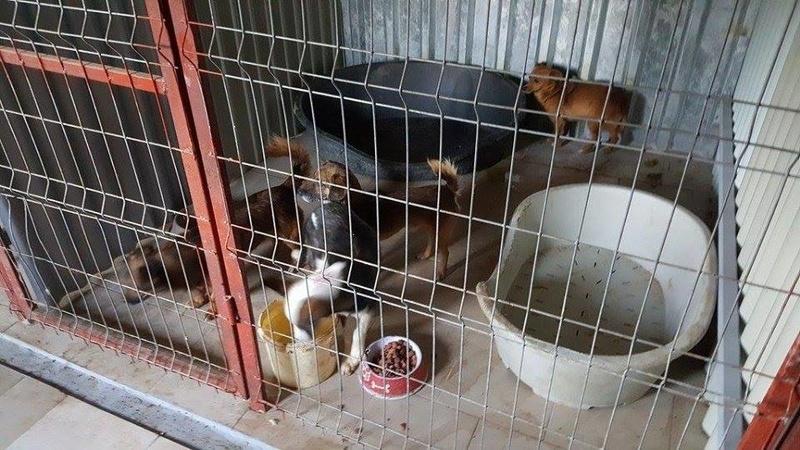 MOLLY, chiot femelle, née en mars 2016, taille moyenne - (Piatra Neamt ) - décédée Molly_10