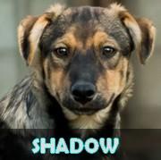 Les adultes de taille moyenne en Roumanie en un clin d'oeil Shadow10