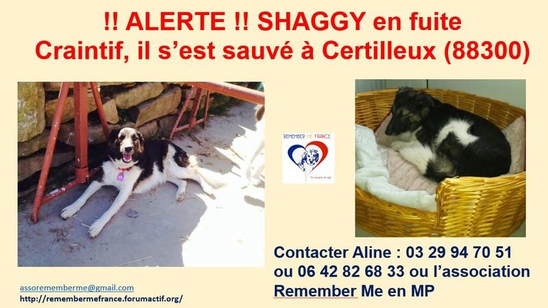 SHAGGY, chiot mâle, né en août 2015 (Pascani) - adopté par Sabine (Belgique) - Page 2 Shaggy11