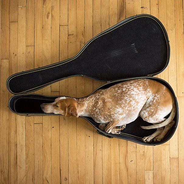 Dessins et Photos humoristiques - Page 6 Animal10