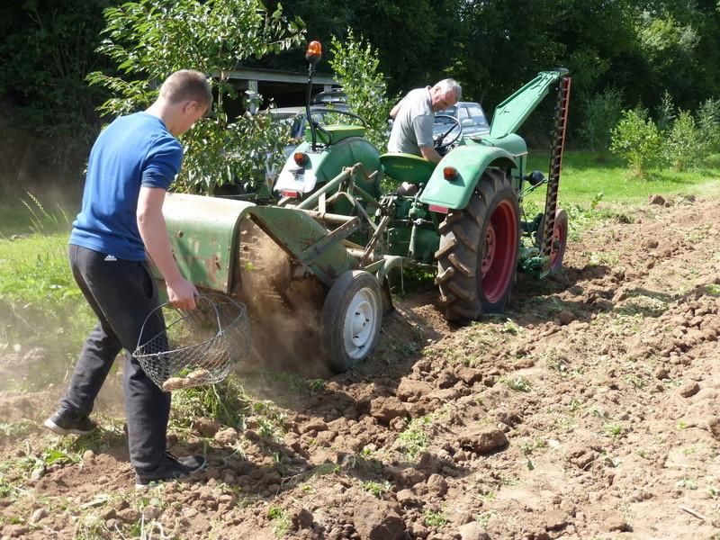 Récolte pommes de terre 2016 P1000080