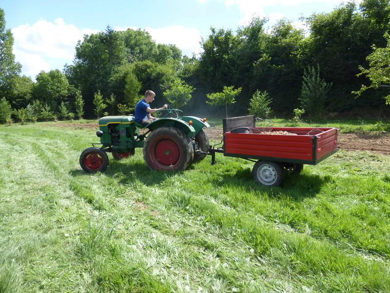 Récolte pommes de terre 2016 P1000081