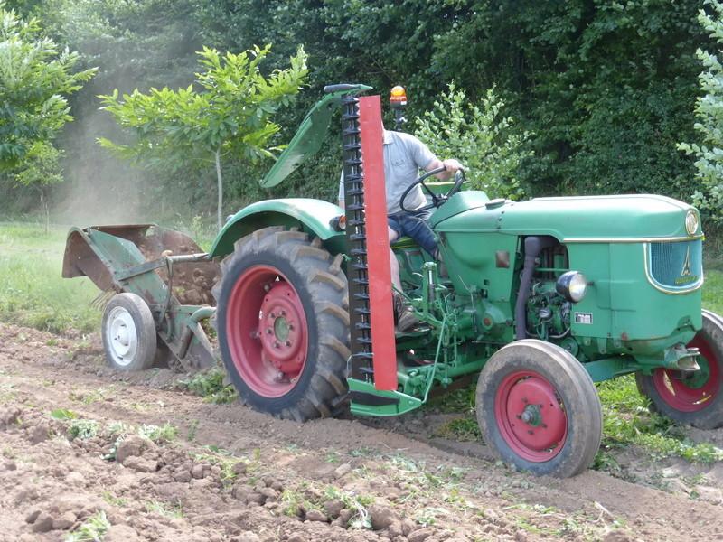 Récolte pommes de terre 2016 P1000082