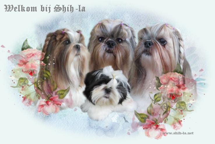 Shihla