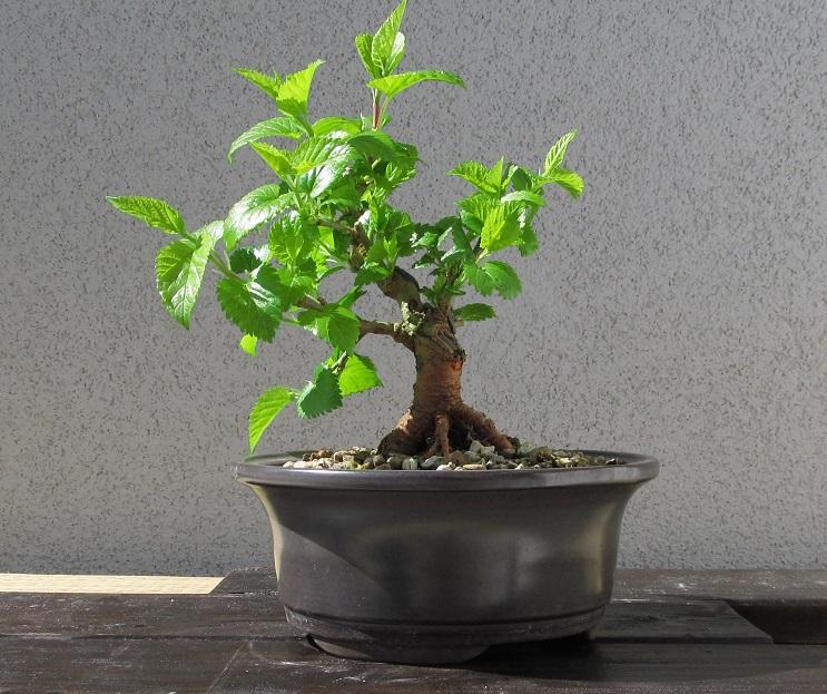 Riconoscimento pianta 2016_410