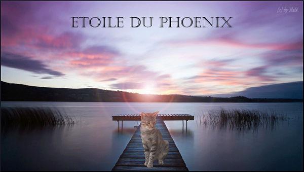 Pelage de Phoque: La prèz! Fiche Validée par Skinou ~ Etoile11