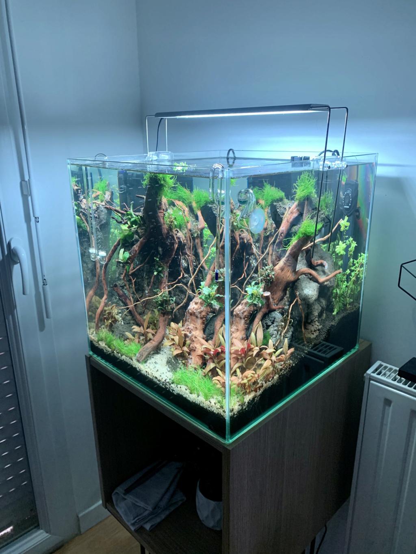 Nouveau projet : 54L Cube aquascaping Fa9ea110