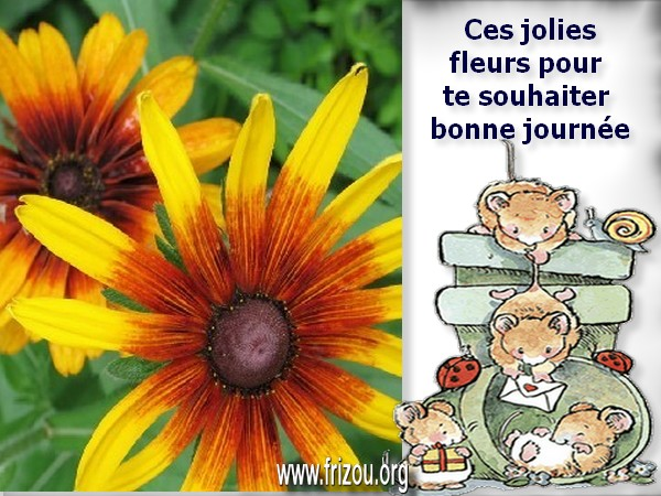 citation du jour/celebres et images de colette Ces_jo10