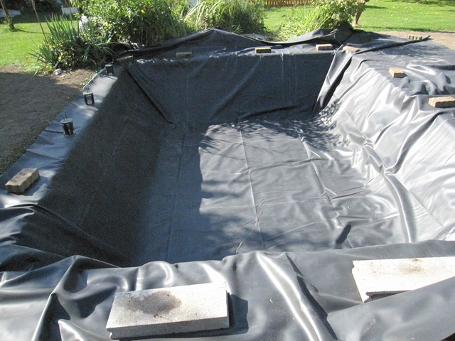Rénovation/construction d'un bassin Img_1522