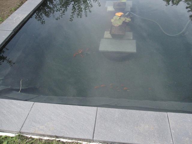 Rénovation/construction d'un bassin Img_1526