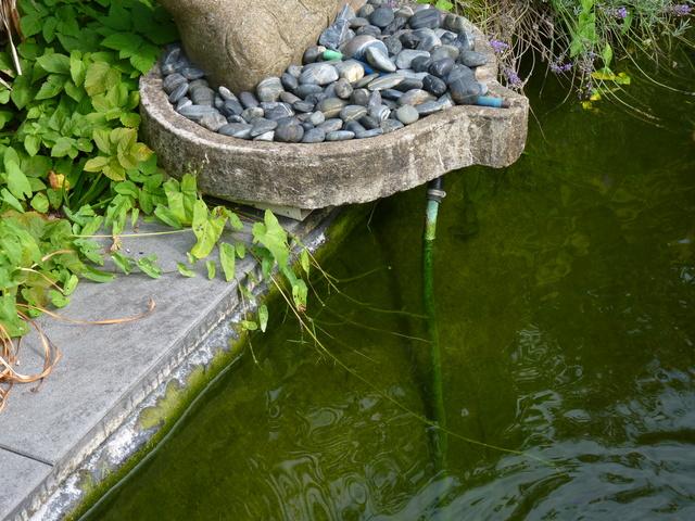 Rénovation/construction d'un bassin P1040717