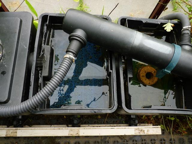 Rénovation/construction d'un bassin P1040721